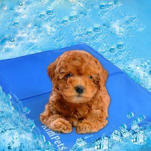 ペットマット 冷却ゲルシート クールマット 涼感冷感 暑さ対応 犬猫用 ペット ひんやり